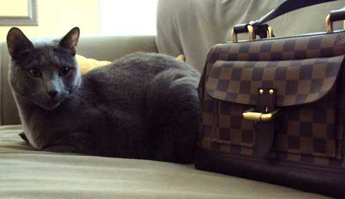 Felix and his new LV